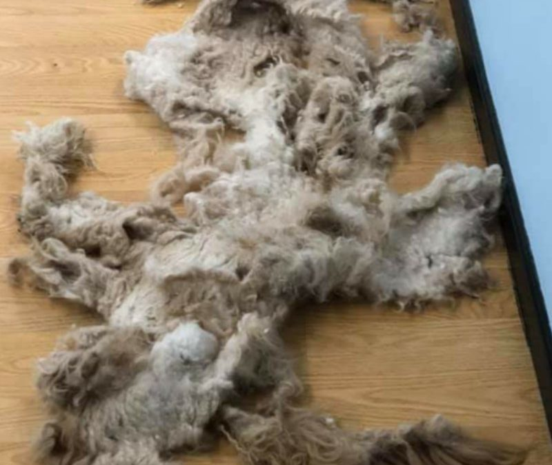 Ik heb vandaag je hond getrimd: Blog 21
