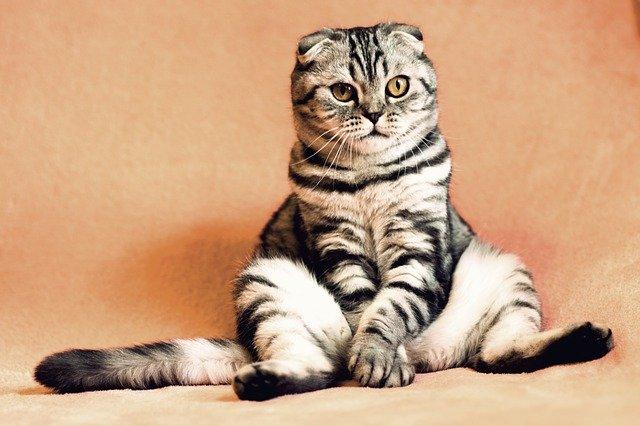 Workshop: katten met een attitude: Blog 23