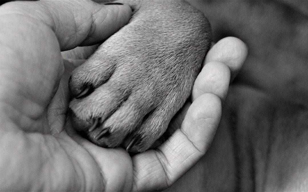 Je huisdier is goed voor jou, wees goed voor je huisdier: Blog 25